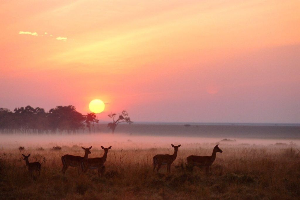 Kenya - 12890 - Sunrise in Masai Mara National Reserve Kenya - Sunset