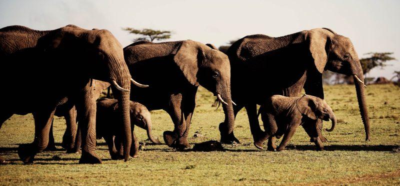 Kenya - 12890 - Karen Blixen Camp - Elephant Family