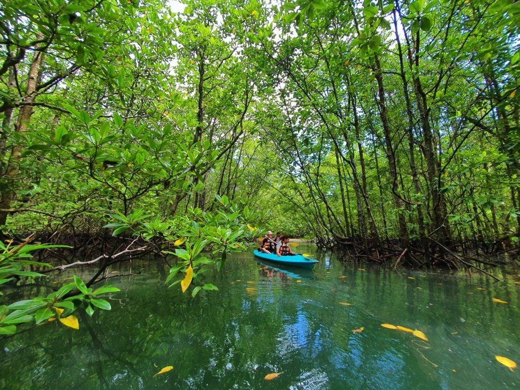 Malaysia - 18266 - Mangrove Kayak Tour