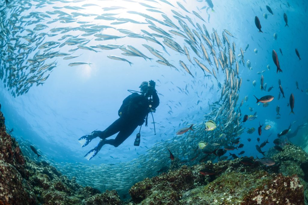 Ecuador - 1557 - Ecuador Galapagos Honeymoon - Galapagos Diving