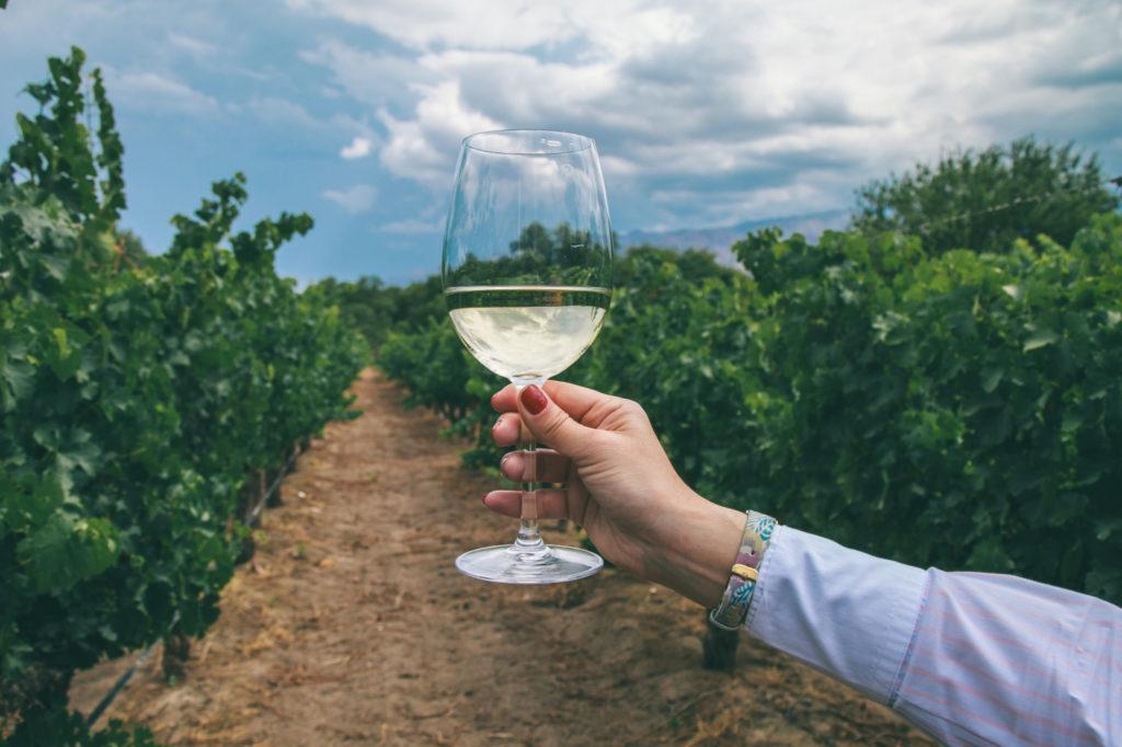Argentina - 1584 - Calchaquí Valleys Cafayate Wine Tour - Northwest - Wine Glass in the wine fields