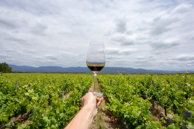 Argentina - 1584 - Full day excursion into Uco Valley area Mendoza - Wine glass in wine fields
