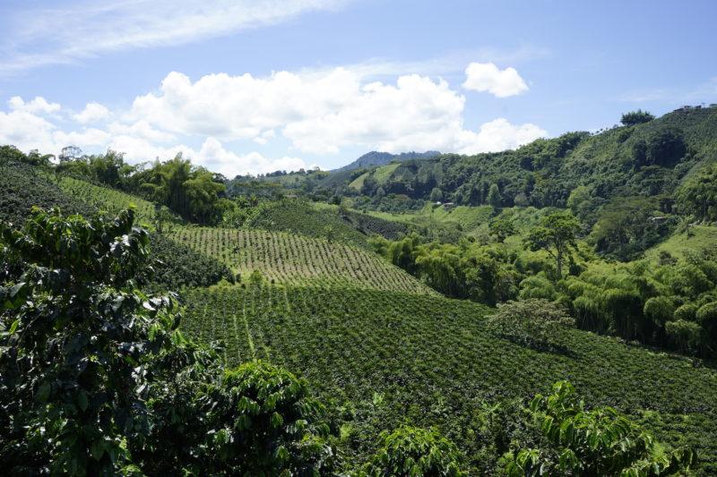 Colombia - 1558 - Coffee Cultural Landscape Quindio