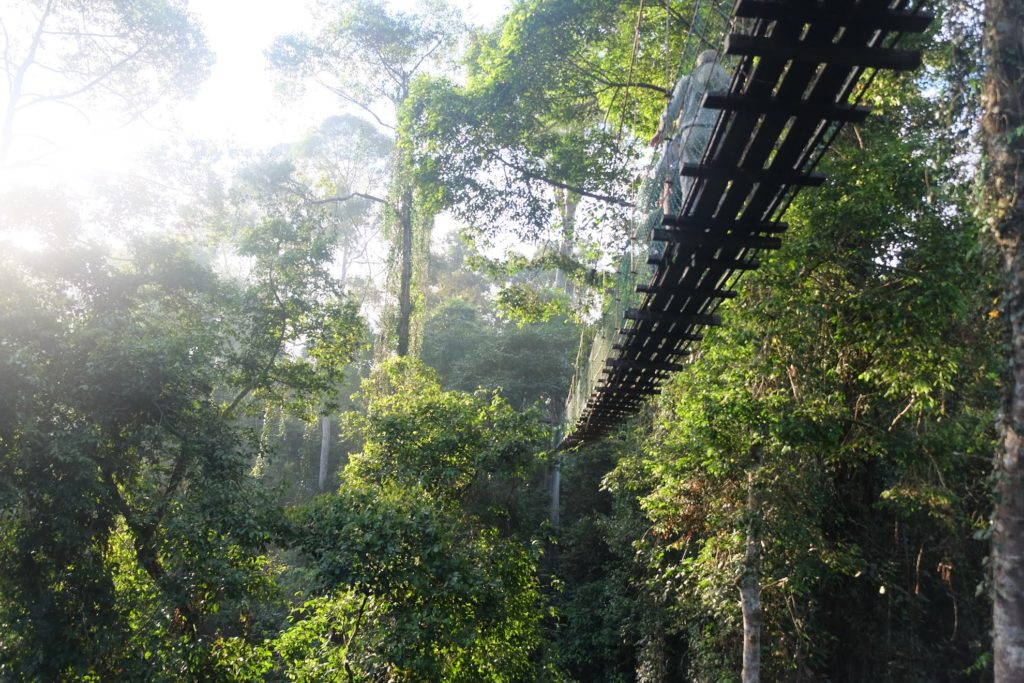 Malaysia - Borneo - 18266 - Treetop walk