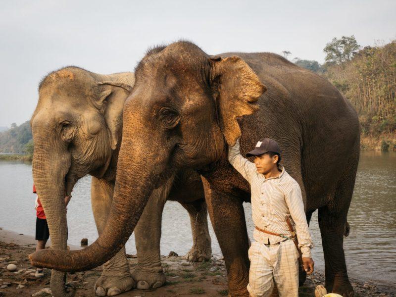 Laos - 17089 - Elephant