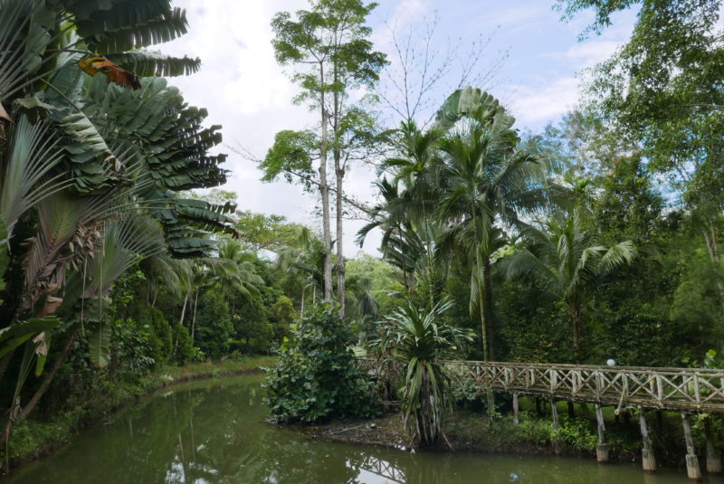 Malaysia - Borneo - 18266 - Sepilok Nature Resort