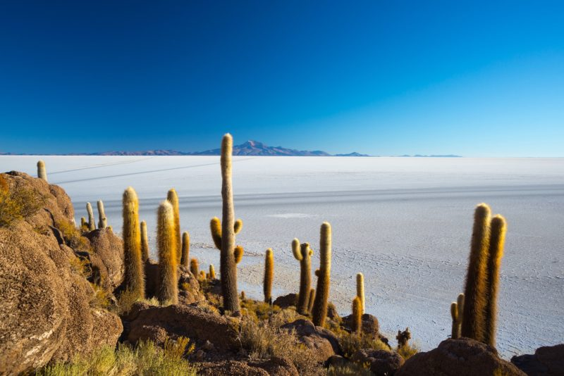 Bolivia - 1561 - Adventure Program - Uyuni Incahuasi Island