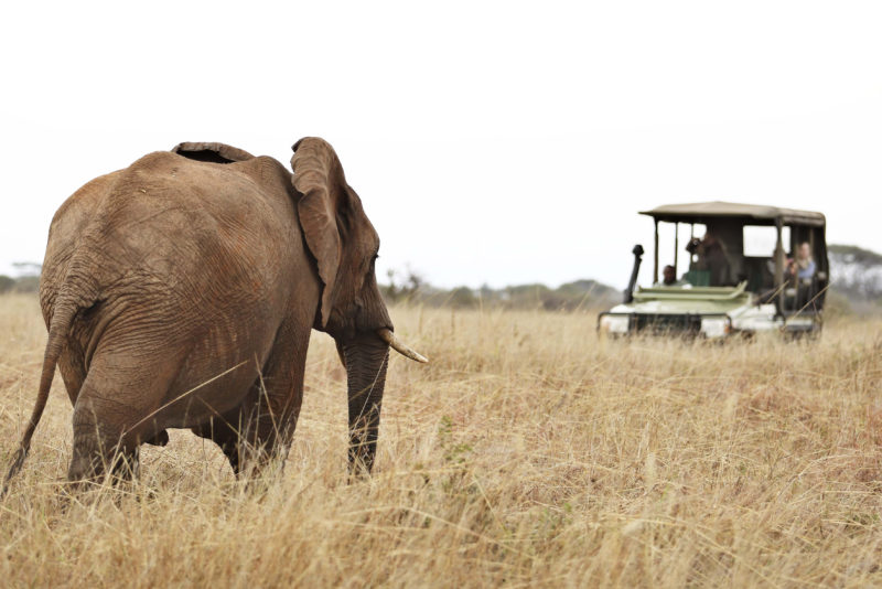 Tanzania - 17467 - Tarangire National Park - Olivers Camp - Game Drives Spotting an Elephant