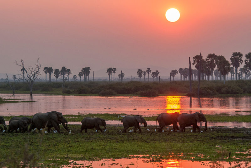 Tanzania - 17467 - Elephants walking along the river - Sunset