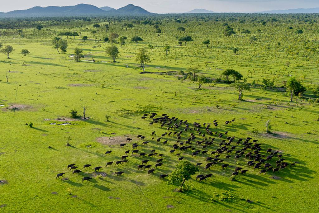Tanzania - 17467 - selous game - aerial view