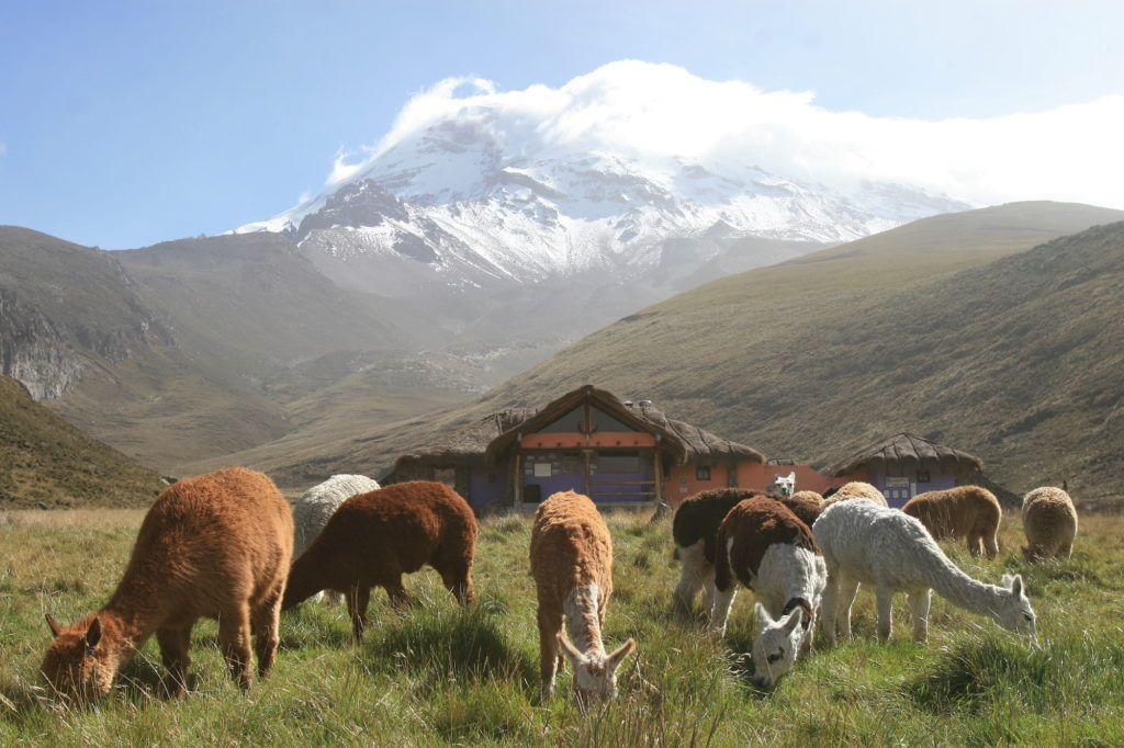 Ecuador - 1557 - Cultural Adventure - Nature and Wildlife
