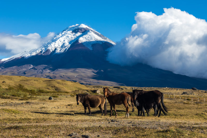 Ecuador - 1557 - Cultural Adventure - Wildlife Horses and Cotopaxi Mountain