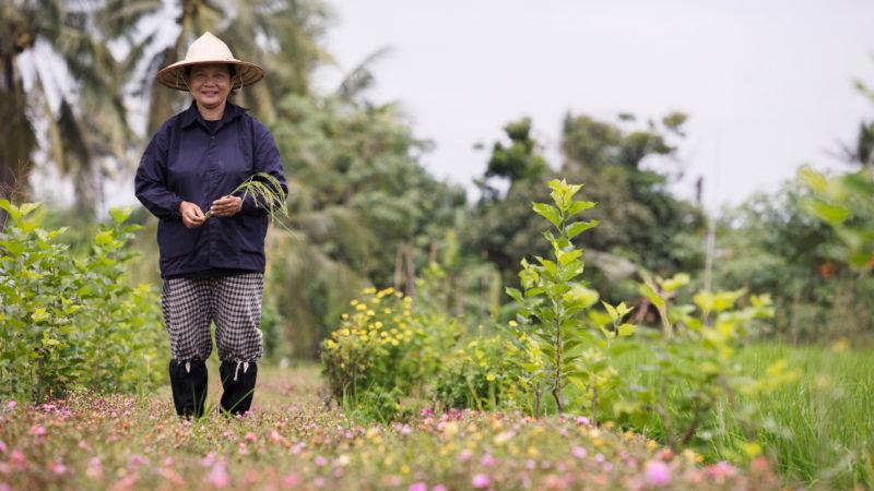 Thailand - 18264 - Organic Village