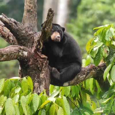 Pure Break Malaysia Natural Wonders