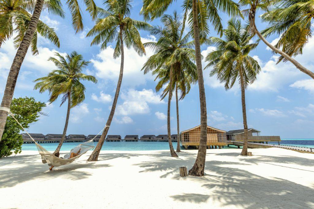 Maldives - Lhaviyani Atoll - 1567 - Kudadoo Private Island - Beach, Coconut Trees and Hamock