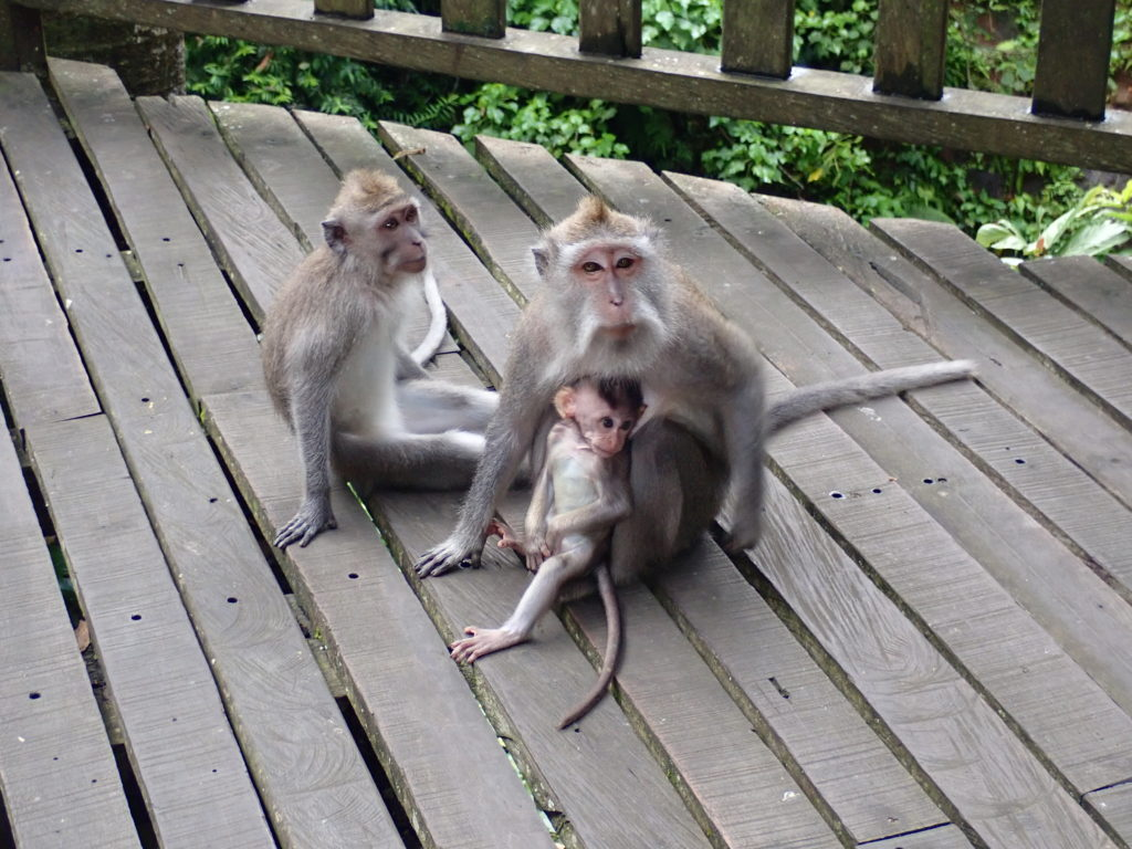 18268 - Indonesia - Monkey