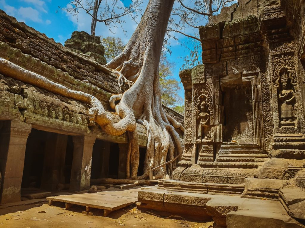 Cambodia - 18260 - Ta Prohm Temple