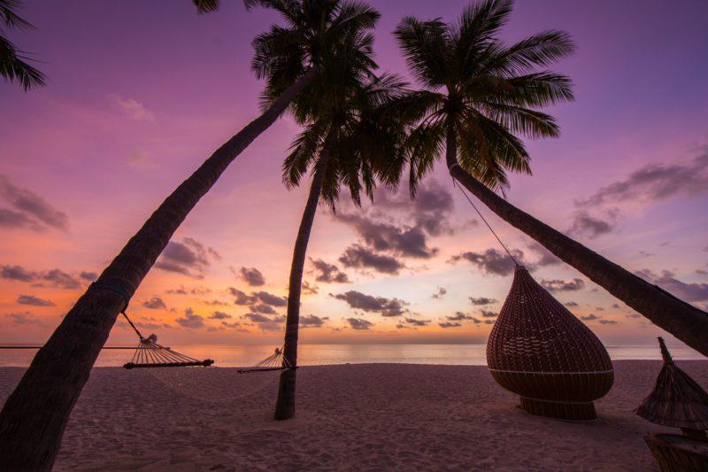 Maldives - North Ari Atoll - 1567 - Veligandu Island Resort - Sunset under palm trees