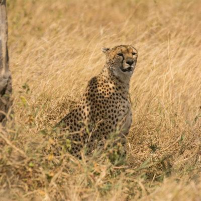 Tanzania Safari Northern Serengeti