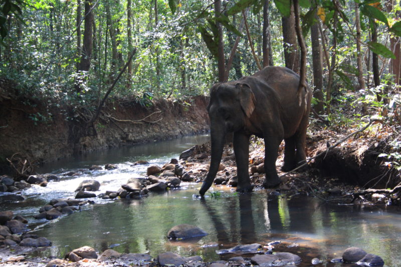 Cambodia - 18260 - Elephant Crossing River