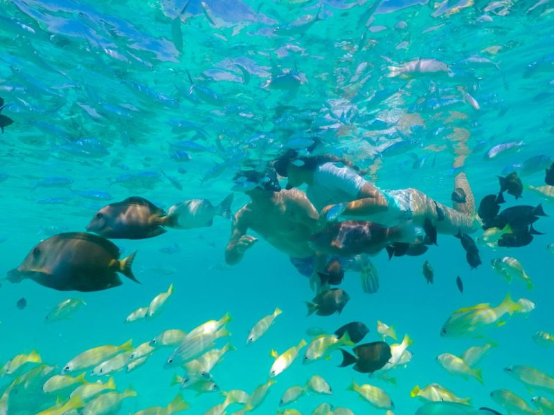 Maldives - Male Atoll - 1567- Kagi Maldives Spa Island - Snorkelling