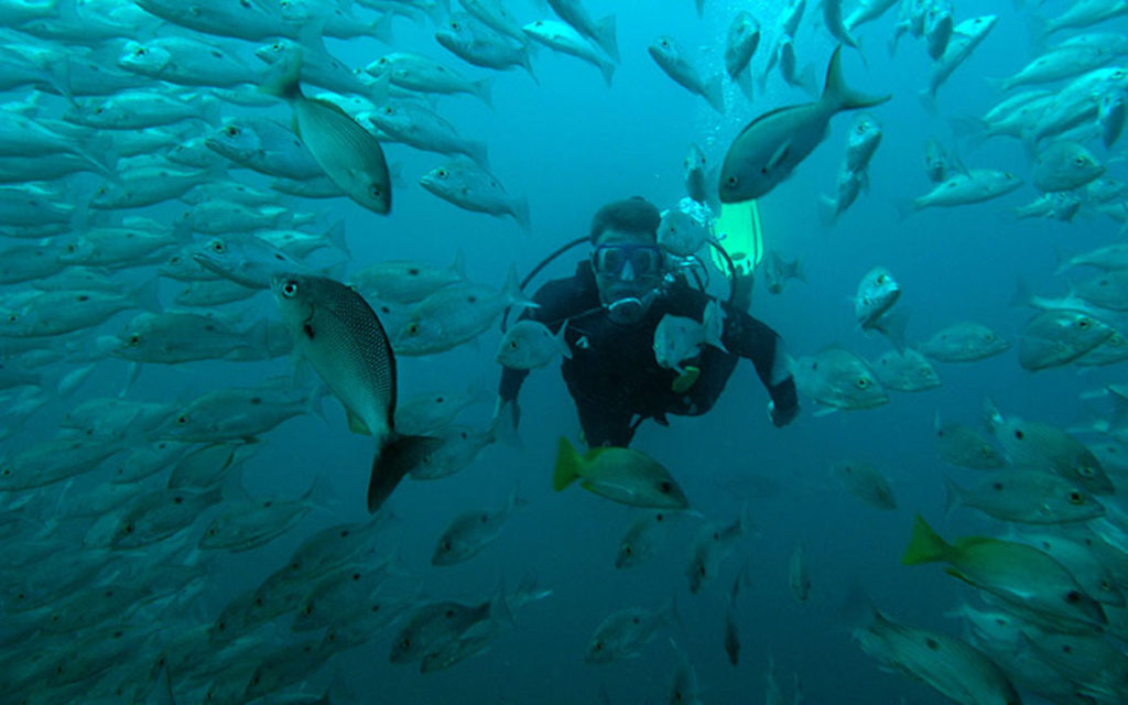Snorkeling and diving with the fish in Drake Bay