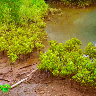Mangrove Conservation Project in Madagascar, Nosy Be