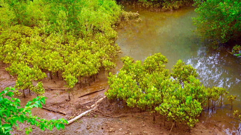 Mangrove Eco Project in Madagascar
