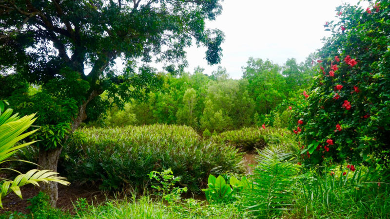 Conserving Mangroves in Madagascar