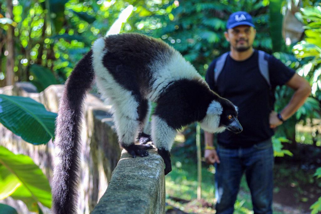 Work with Ruffed lemurs in Madagascar