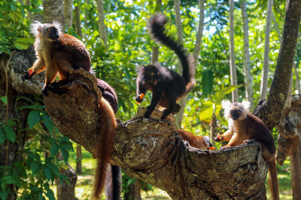 Lemur Conservation Project in Madagascar