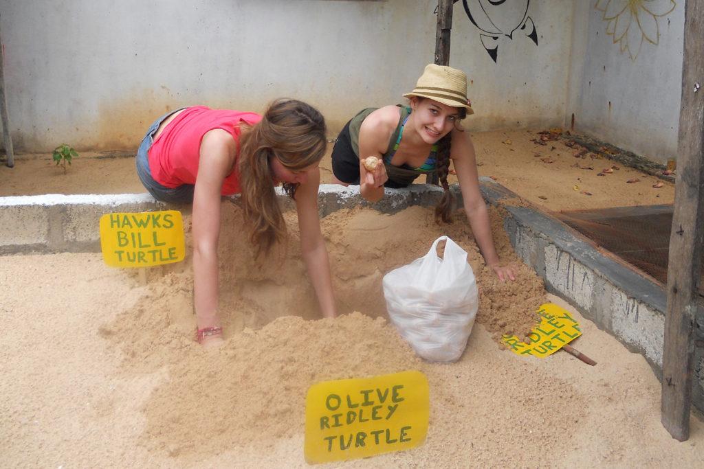 Counting Turtle Eggs in Sri Lanka