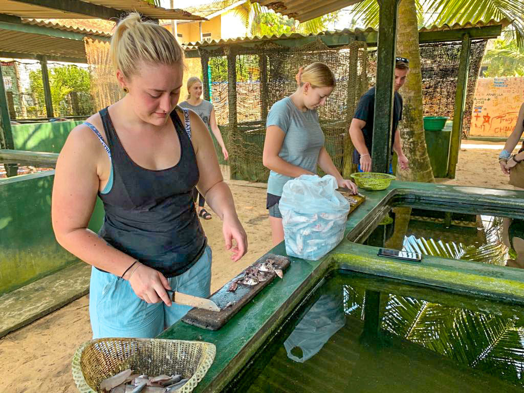 Preparing Turtle Food in Sri Lanka