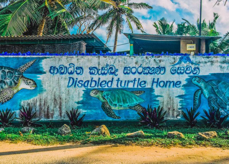 Disabled Turtles Rescue Centre Sri Lanka
