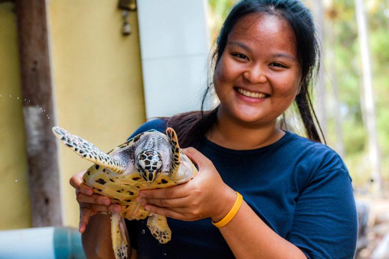 Save Turtles in Indonesia, Bali