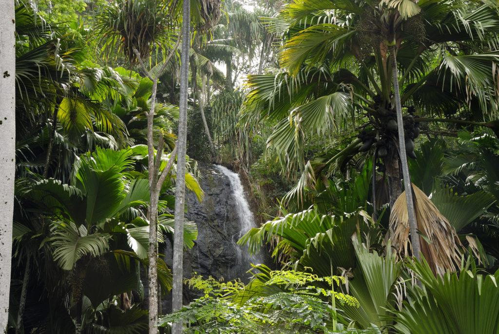 Seychelles - 1554 - Waterfall