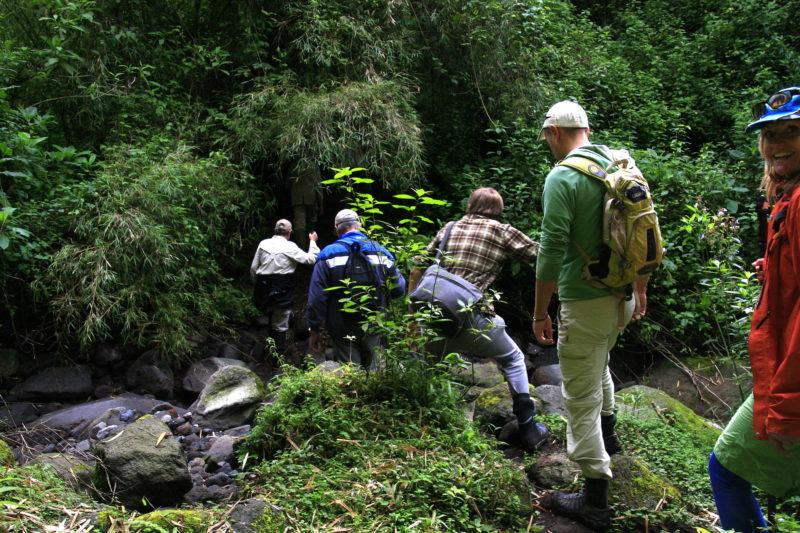 Rwanda - Volcanoes National Park - 1568 - Sabyinyo Silverback Lodge trekking