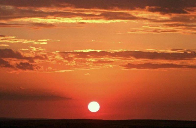 Mara Bushtops - Sunset