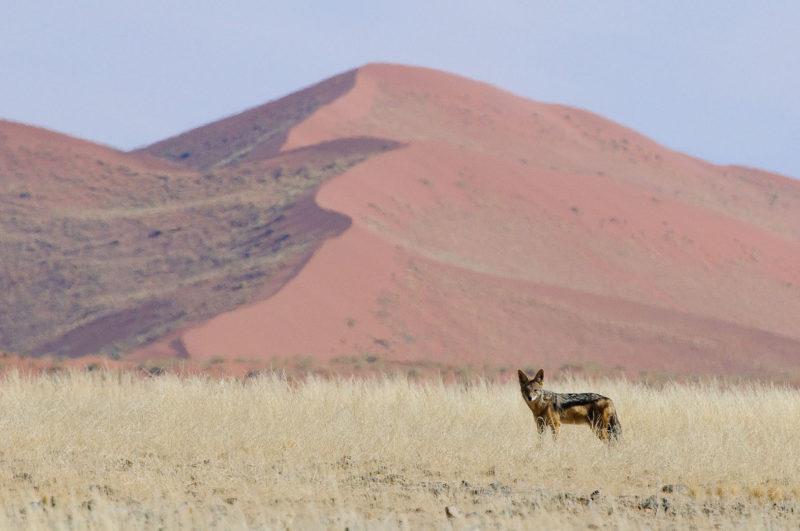 Namibia - Wildlife
