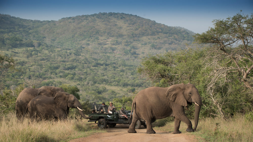 andBeyond Phinda Private Game Reserve - Rock Lodge - Elephant