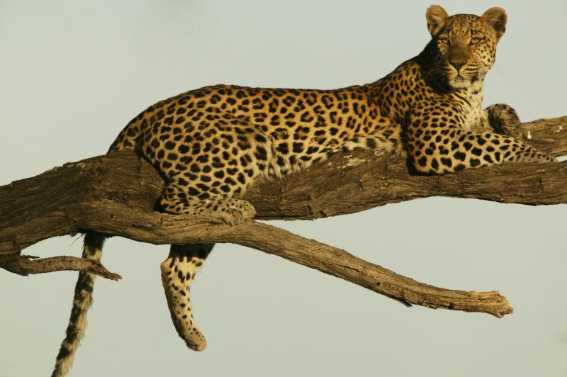 Selinda Reserve - Wildlife J