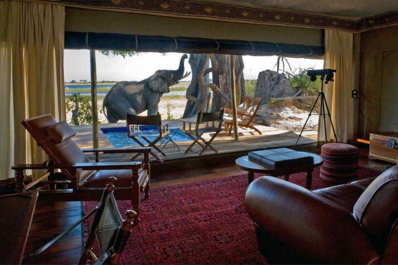 Zarafa Camp - Elephant on accommodation
