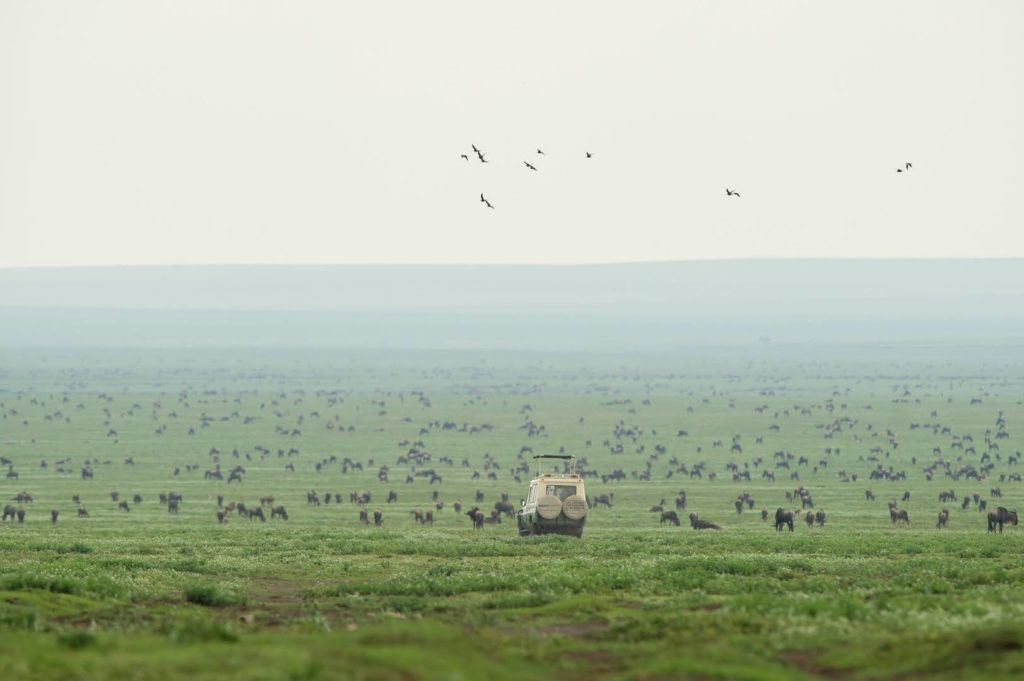 Serengeti Safari Camp South - Game Drive