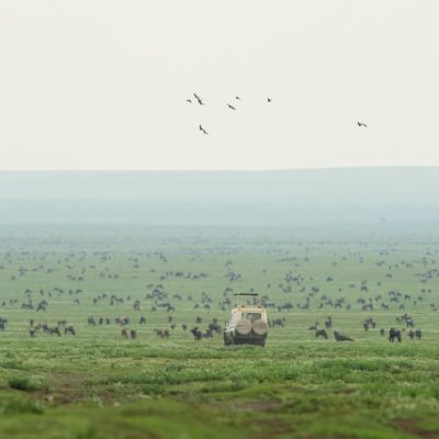The Path of the Great Migration