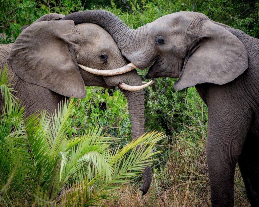andBeyond Kirkman's Kamp - Elephant