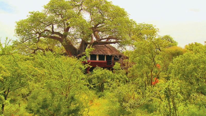 Elewana Tarangire Treetops - Tree House