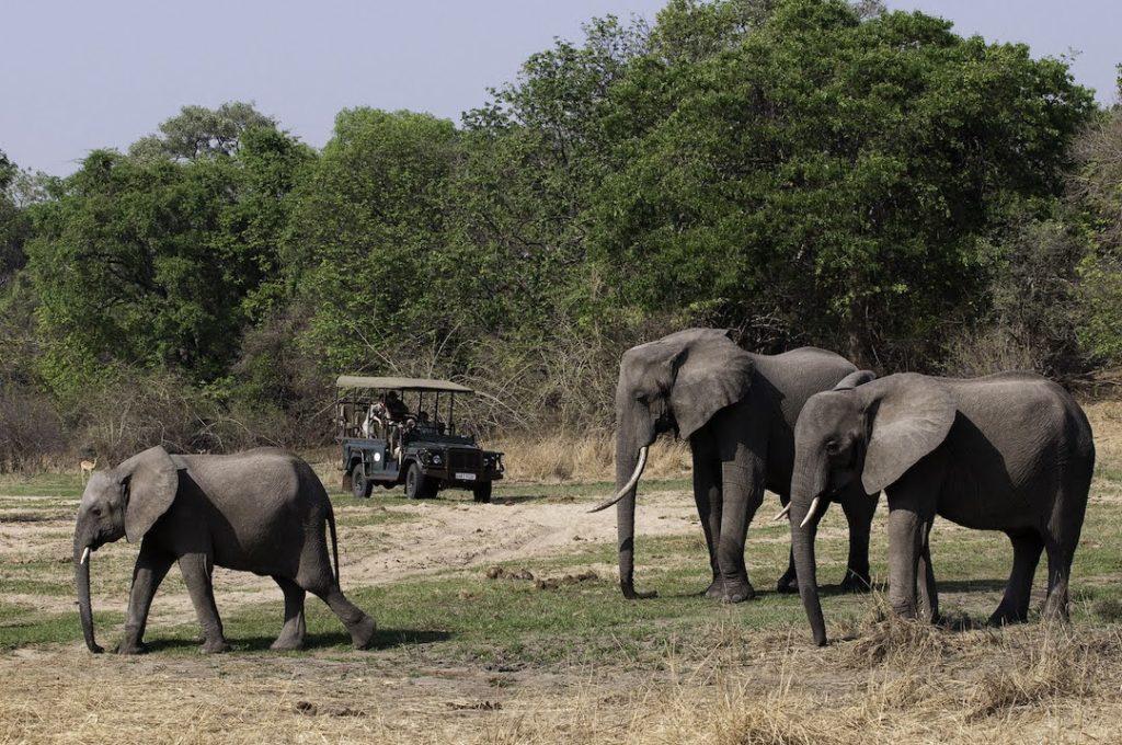 Sanctuary Sussi and Chuma - Elephant